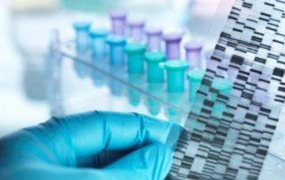 100 bp DNA ladder